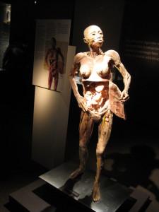 fantástico_corpo_humano_2