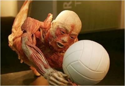 fantástico_corpo_humano_6